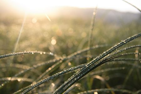 Morning dew on a humid meadow. Stock Photo