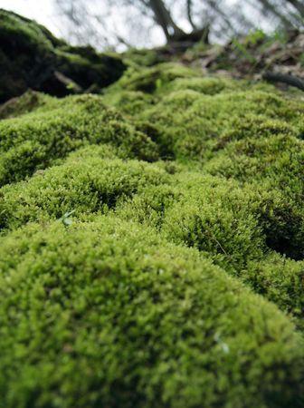 Moss on a ravine slope.  Stock Photo