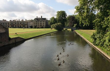 Flock of ducks on river Cam.Cambidge, England.
