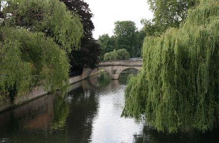 Cambridge. Willows and bridges over river Cam.