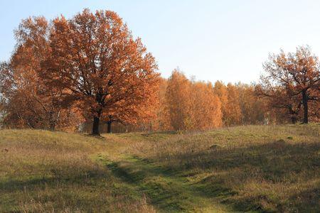 Autumn oak tree. Stock Photo