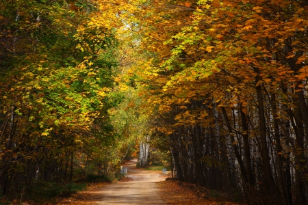 Country road in autumn wood. Standard-Bild