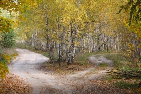 Crossroads in autumn wood.