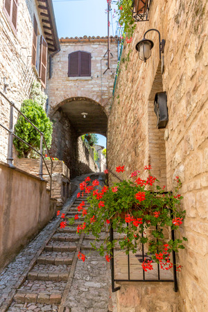Plants and flowers in front of streets and houses in Spello, Italy