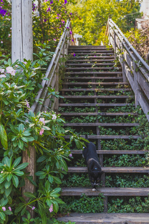 Cat going down stairs at Filbert Street Stairs by Telegraphi Hill in San Francisco, USA Standard-Bild - 123157163