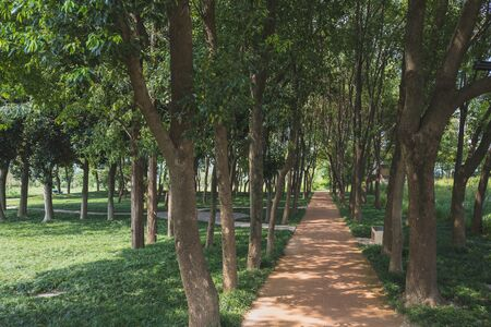Woods at Archaeological Ruins of Liangzhu City, Hangzhou, China