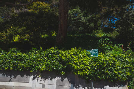 Street sign to Coit Tower among trees on Telegraph Hill in San Francisco, California, USA Stock fotó