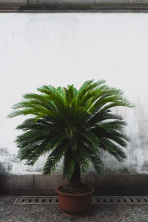Palm tree in front of a white wall