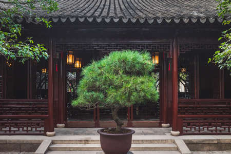 Plant in front of traditionnal Chinese house at Lingering Garden Scenic Area in Suzhou, Jiangsu, China