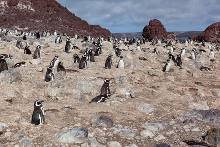 Penguins sitting on the rocky beach