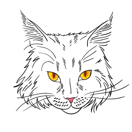 pussy cat: Maine coon cat portrait. Hand drawn vector illustration. Illustration