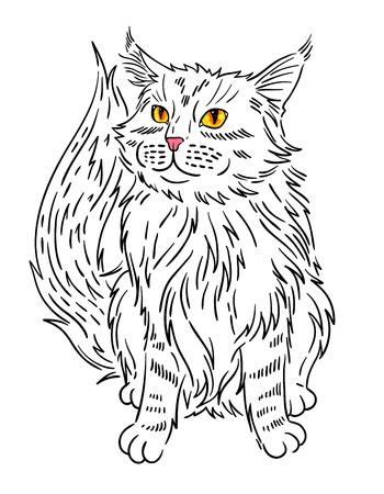 Maine coon cat portrait. Hand drawn vector illustration. Illustration