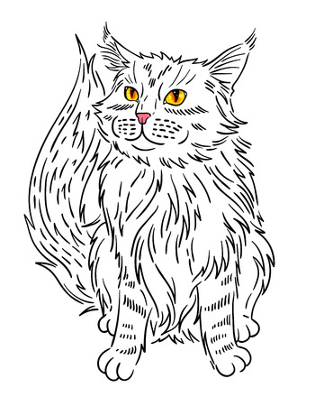 moggy: Maine coon cat portrait. Hand drawn vector illustration. Illustration