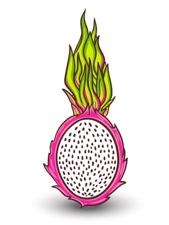 fruit du dragon: Isolated fruit du dragon. Tropical vecteur illustration