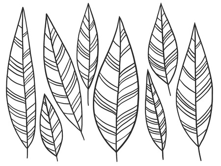 Hand-drawn ornamental nature leaves lineart collection. Vector black and white chic boho tribal feather illustration set. Ilustração