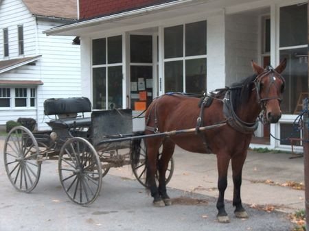 Amish Horse Buggy Rural Pennsylvania by Heather Fox