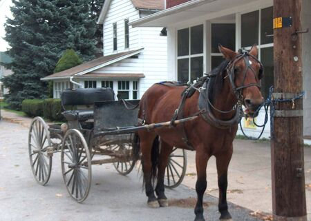 amish buggy: Amish Horse Buggy Rural Pennsylvania by Heather Fox