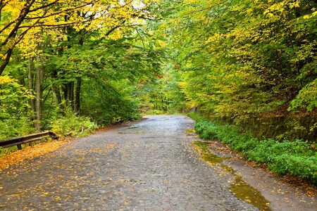 Autumn leafs on a wet road through the forest after a rainy day, Romania photo