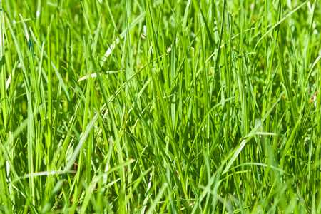 Very beautiful and vibrant colored green grass close-up photo