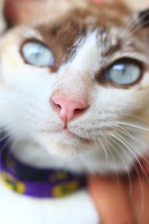 Cat nose on the front of the cat. The pink cat nose close up. 写真素材