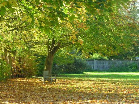 An autumn scene of fallen leaves and a park bench
