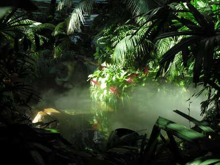 An indoor model rainforest