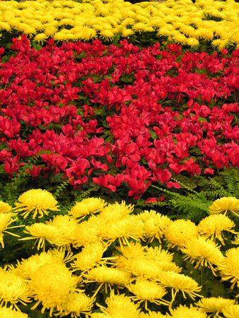 A display of red and yellow flowers photo