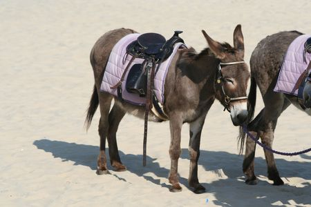 Donkey on the beach in Weymouth photo