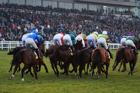 The rear view of a pack of race horses competing at an event at Sandown race course in Surrey. Stock Photo