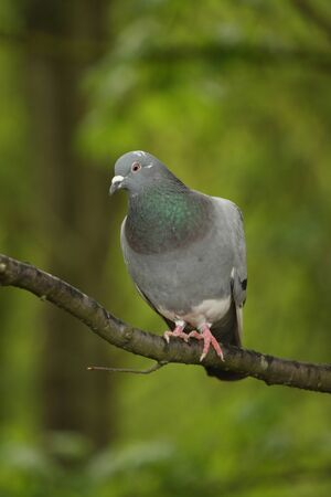Vertical shot of a pigeon on a branch against bright green foliage