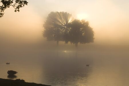A misty morning in Bushy Park, London, England.  Taken on a cold Autumn day, the sunrays are coming through a tree. photo
