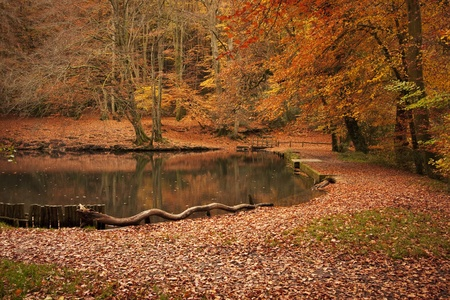 hampshire: Autumn landscape in forest woods with a lake, lots of red and orange leaves on the ground. Taken at Waggoners Wells in Grayshott, Hampshire, England.
