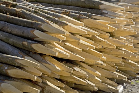 sharpen: A stack of pointed sharpen wooden posts or fence stakes.