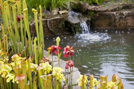 water feature: A garden pond scene, with flowers in the foreground and a small water feature waterfall in the background slightly out of focus.