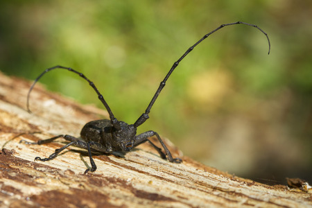 Went for a walk with a mustache beetle, check out his territory    photo