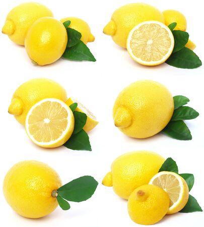 lemon collection photo