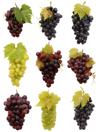 Juicy Grapes on white background photo