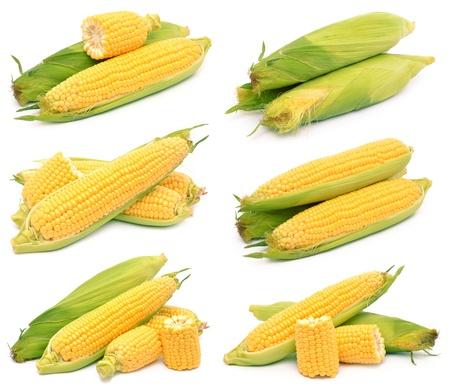espiga de trigo: Ma�z en un fondo blanco