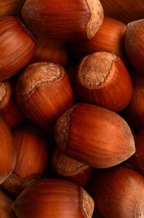 Hazelnuts closeup Stock Photo - 17190233