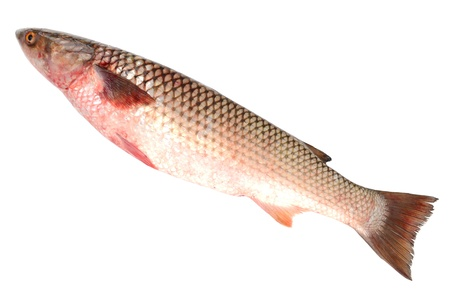 Raw fish on a white background Stock Photo - 17438116