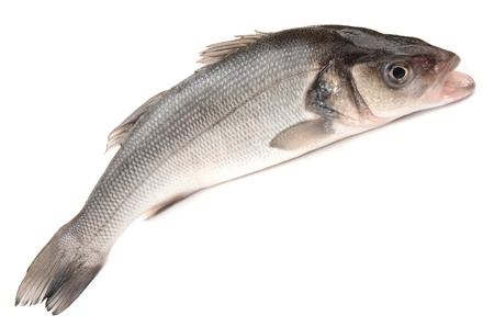 catch of fish: Seabass on a white background