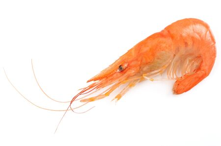shrimp on an isolated background