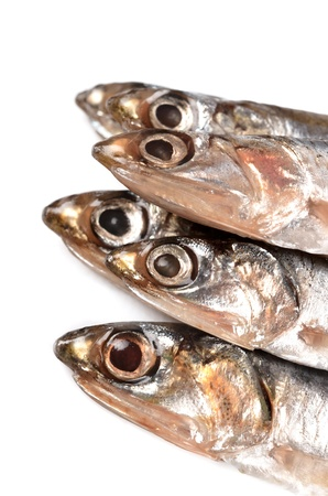anchovy Stock Photo - 18084892