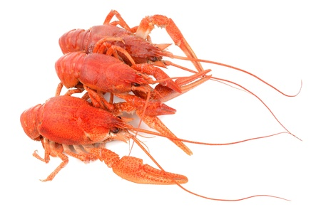 crayfish on a white background Stock Photo - 19137637