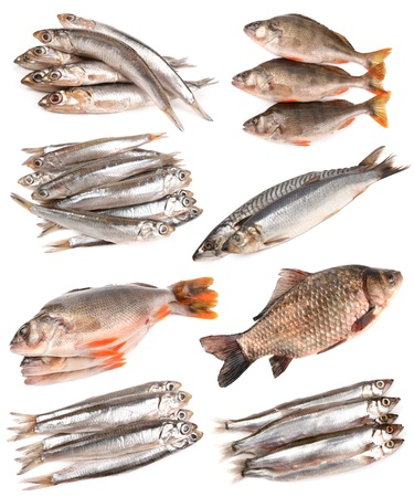 Vissen collectie