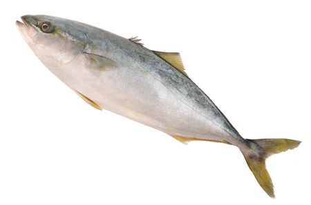 Tuna on white background Stock Photo - 20407741