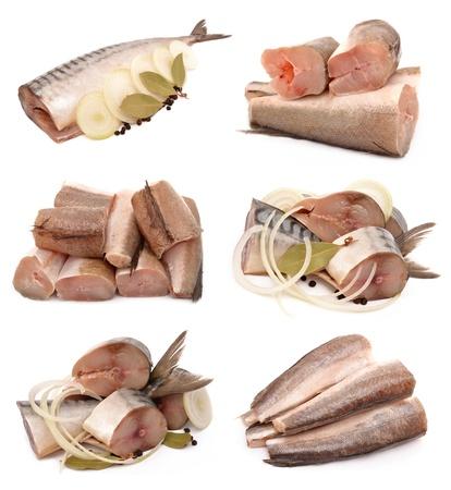 Makreel en heek op een witte achtergrond