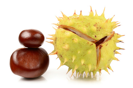 Chestnuts on a white background