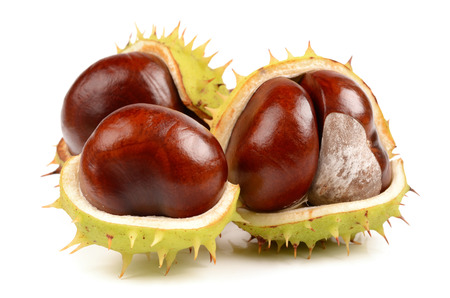 aesculus hippocastanum: Chestnuts on a white background
