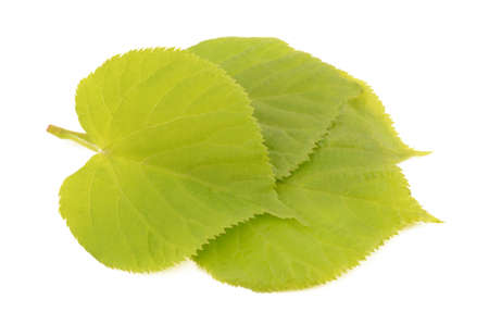 linden: linden leaves